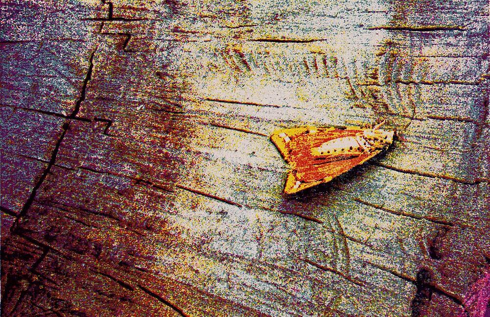 Moth In Print by Nicole Cultraro