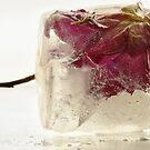 Frozen beauty *2 by Inese
