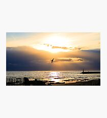 Seagull in the sky Photographic Print