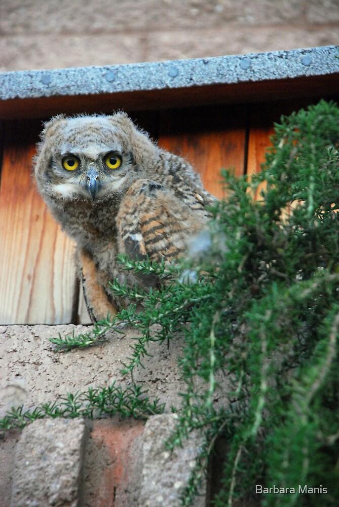 Hooooooo Are You Looking At? by Barbara Manis