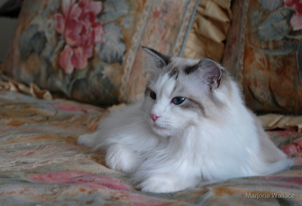 My Gorgeous girl... by Marjorie Wallace