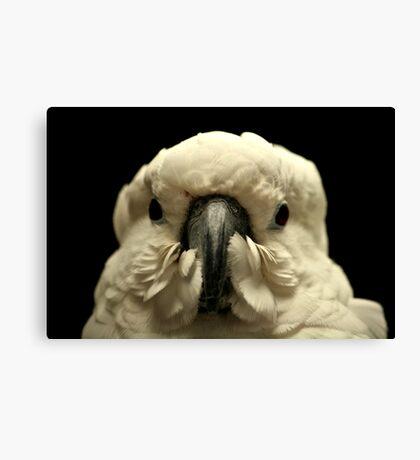 Close Up Of A Parrot. Canvas Print
