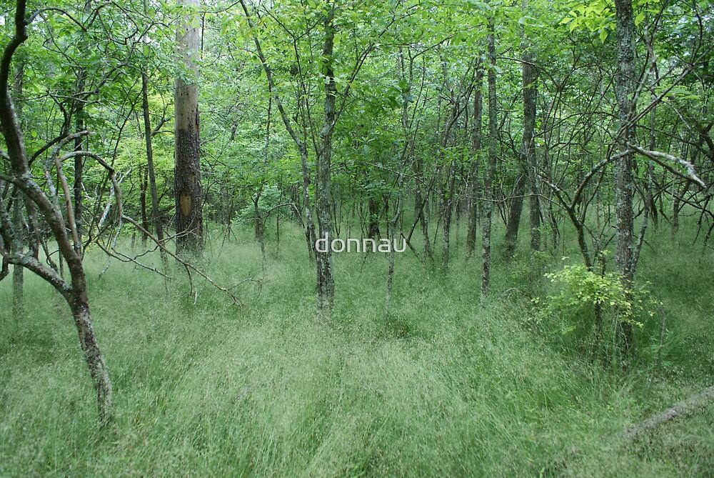Enchanted Meadow by donnau