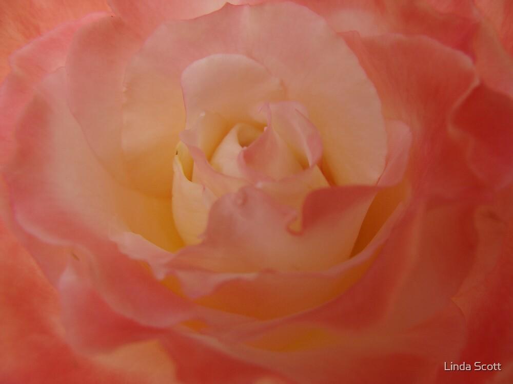 Softness by Linda Scott