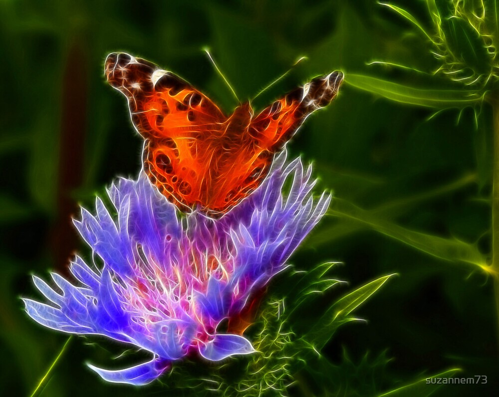 Painted Lady by suzannem73