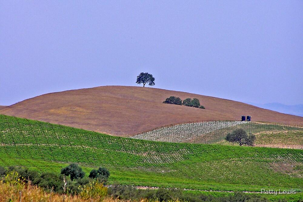 Lone Oak by Patty Lewis