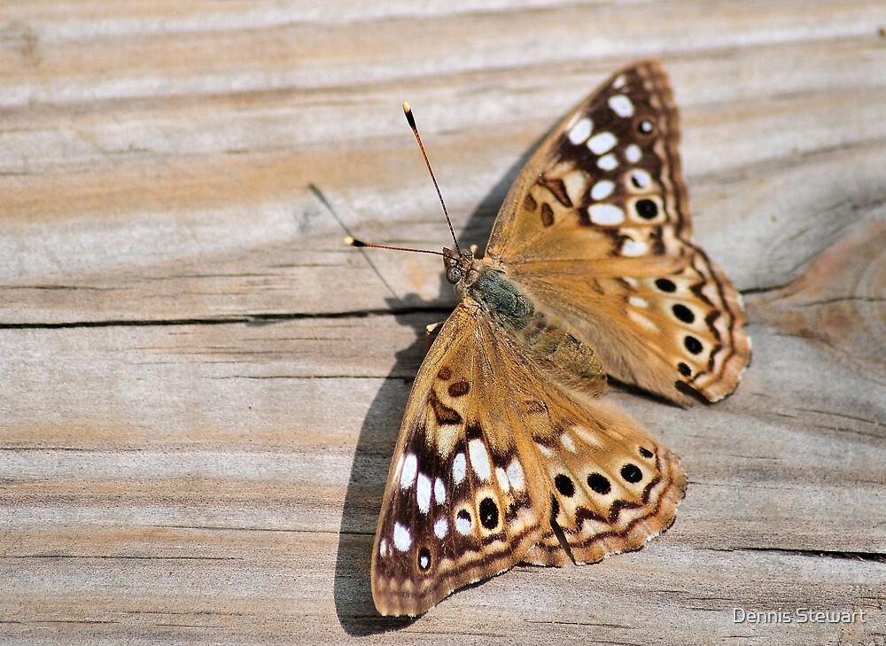 Butterfly On Deck by Dennis Stewart