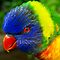 Your Most Colorful Birds