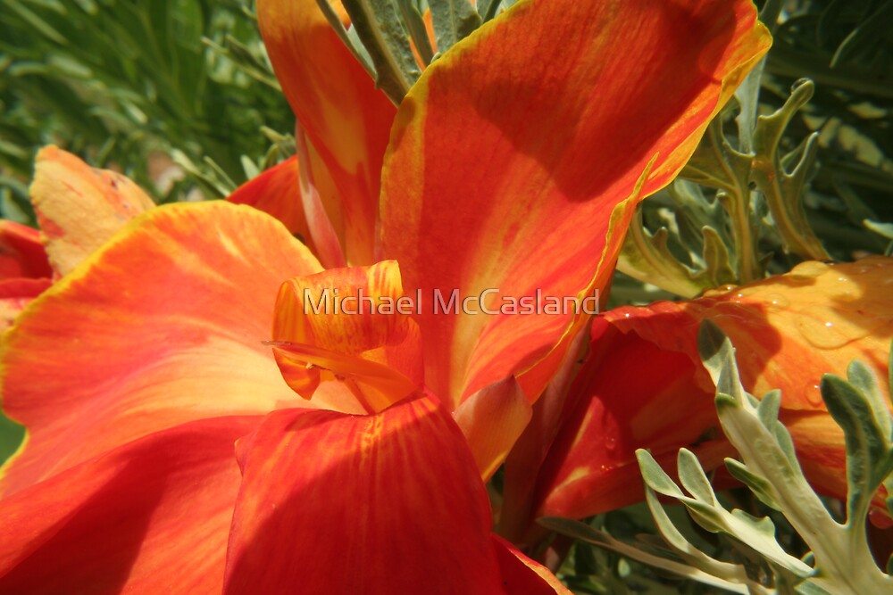 Red - Yellow 2 by Michael McCasland