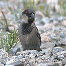 an unknown bird by memaggie