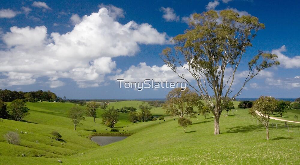 New South Wales South Coast by TonySlattery