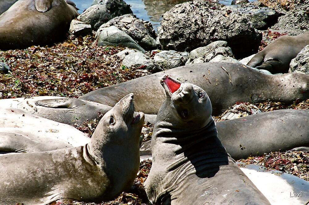 Elephant Seals Talking Big Sur Coast by Lexi