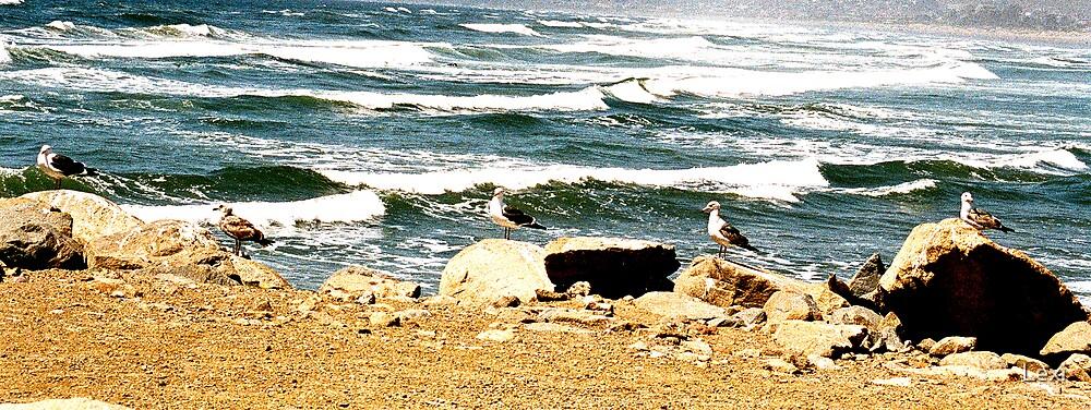 Five Seagull Sentries by Lexi