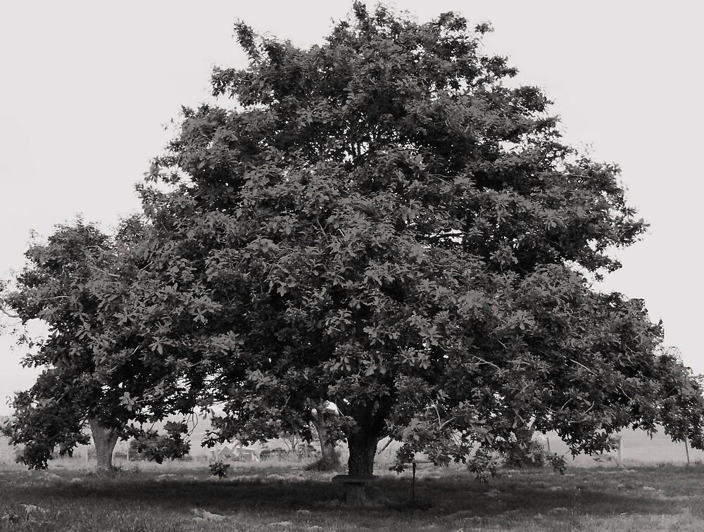 Misty Oak by handmaidbyhelen