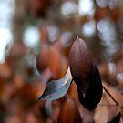 Burnt Tree Leaves by vonb