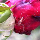 Who's Been Eating My Roses? by Erica Long