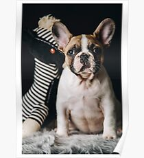 French Bulldog Cute Poster