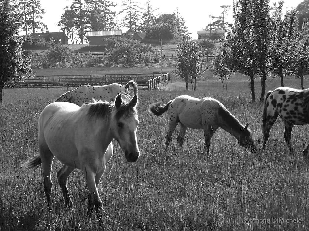 neighborhood horses (4) by Anthony DiMichele