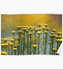 Yellow Stepping Stones Poster