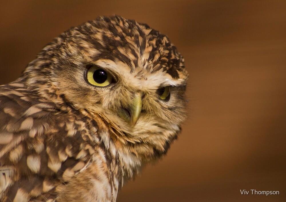 Burrowing Owl by Viv Thompson