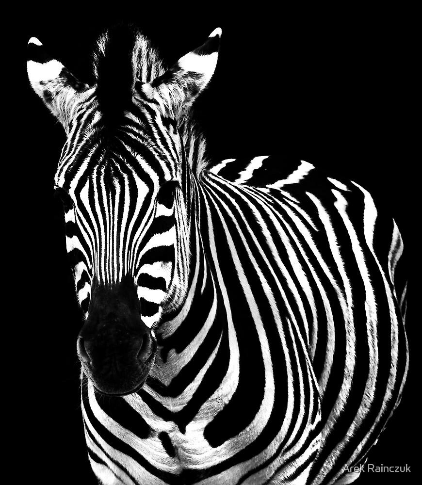 The zebra by Arek Rainczuk