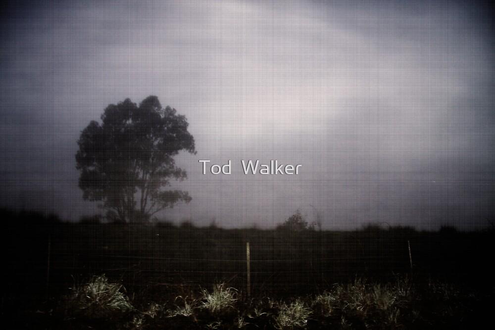 FOG  by Tod  Walker