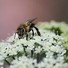 Biene im Detail - Ganz nah dran von LarryWintersohn