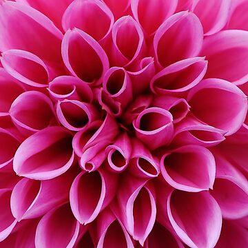 Flowers Peonies by belka