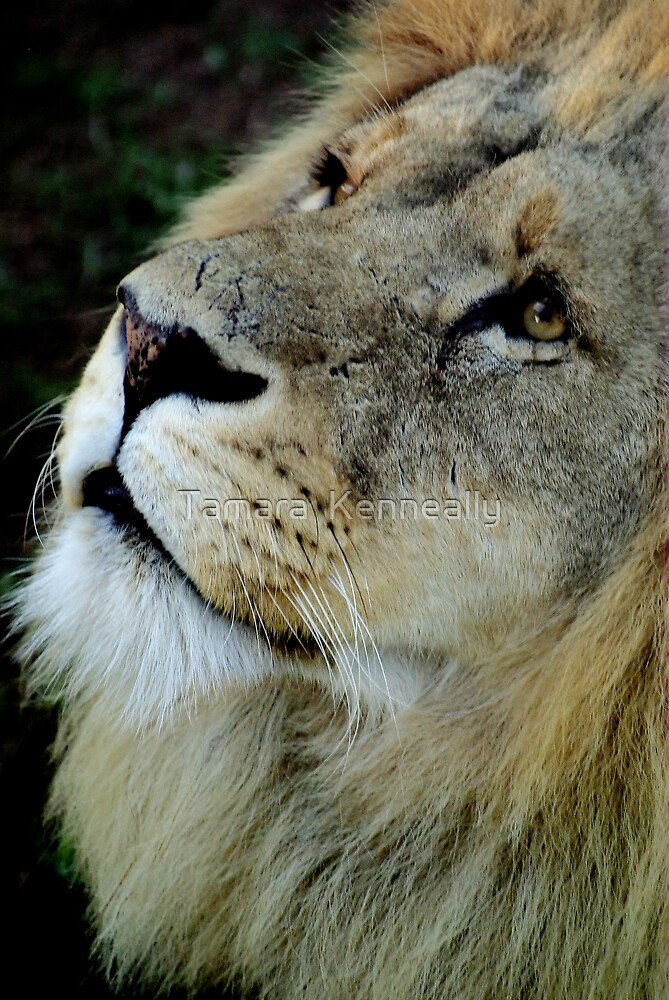 The King by Tamara  Kenneally