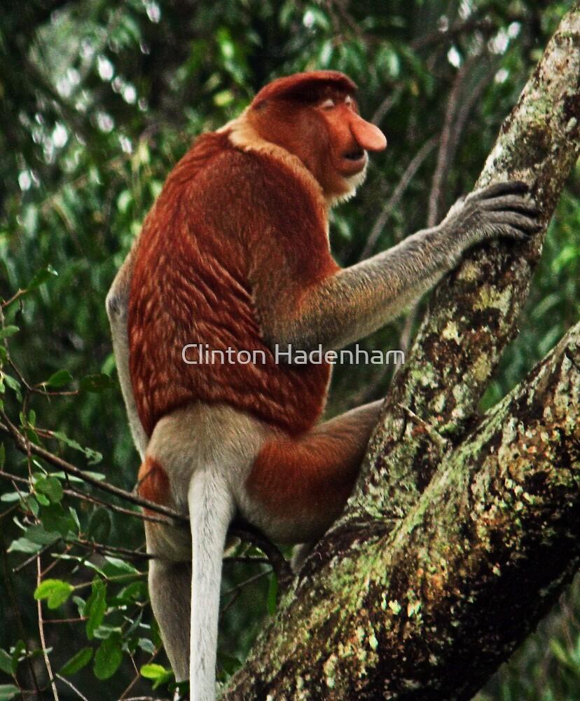 Proboscis Monkey by Clinton Hadenham
