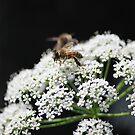 Zwei Bienen von LarryWintersohn