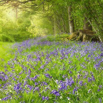 Bluebell Heaven by chuckirina