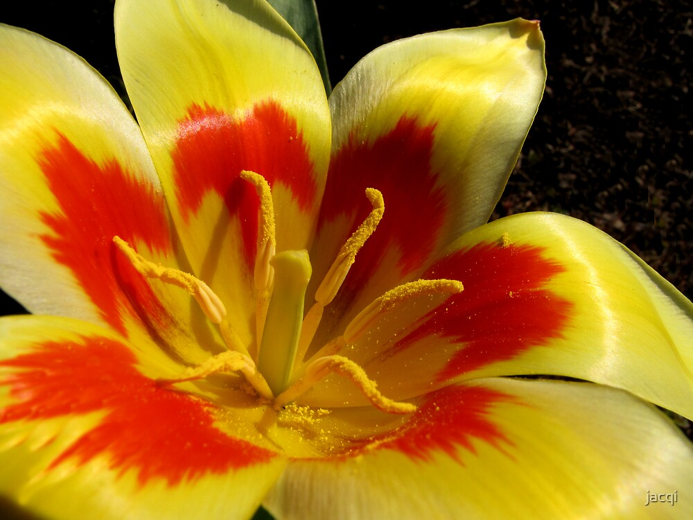 Red and Yellow by jacqi