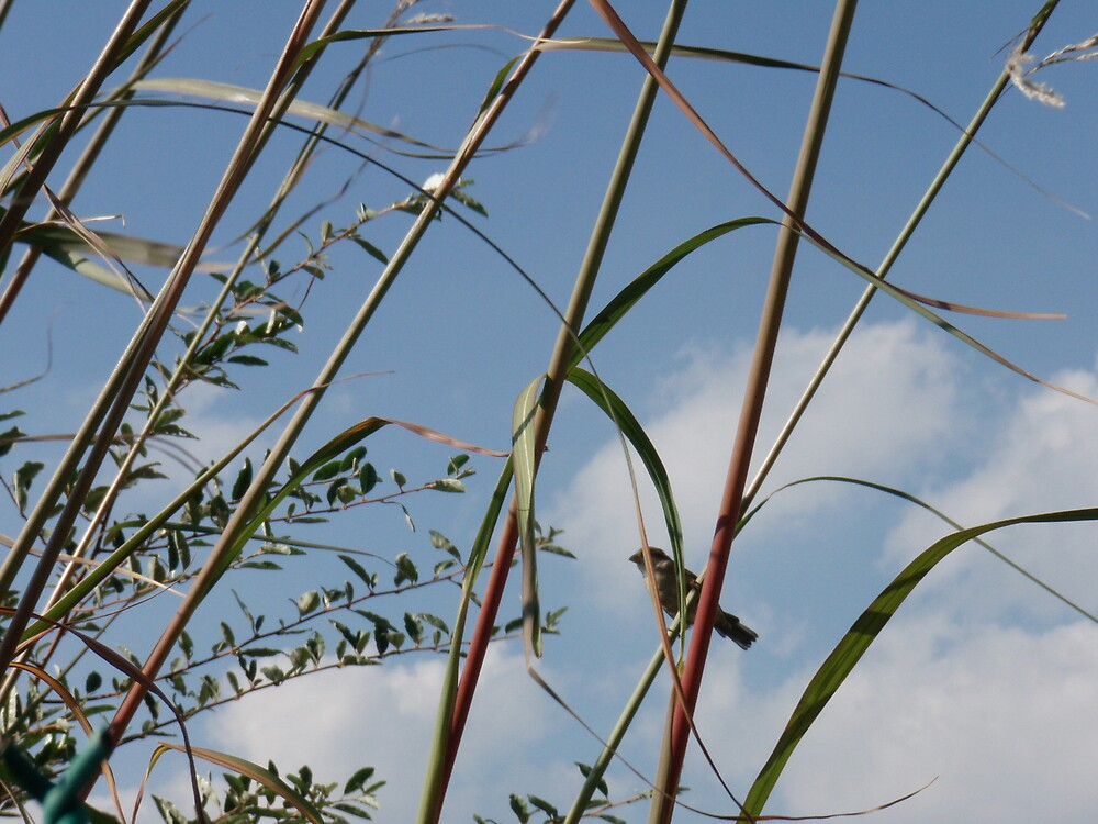 bird on reeds by DarylE