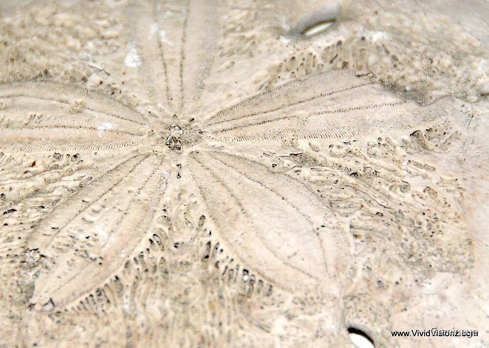 Sand dollar by Gemineye