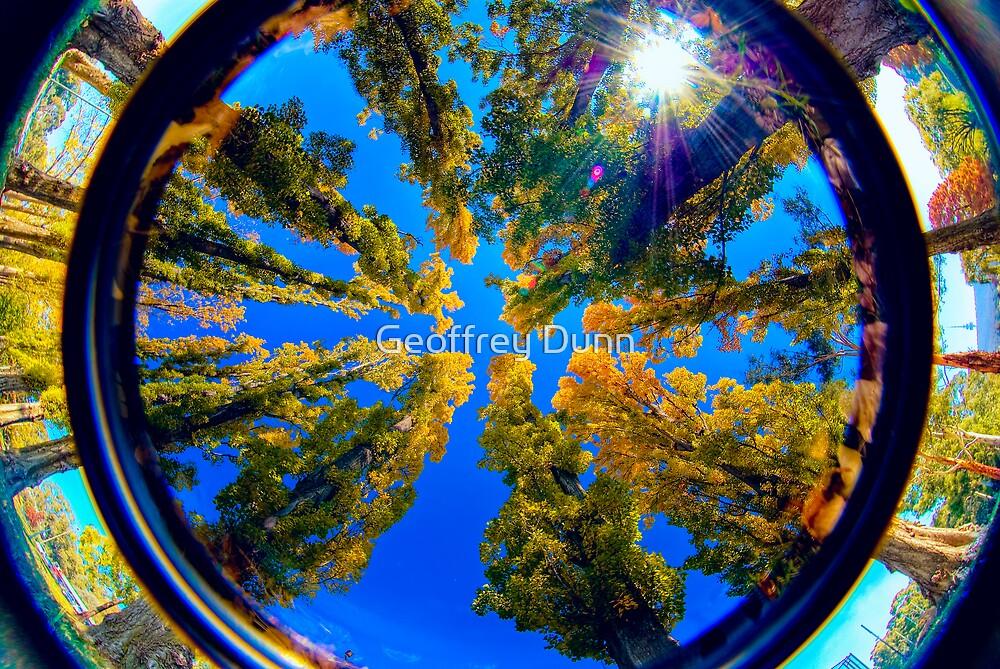 Canberra, Autumn by Geoffrey Dunn