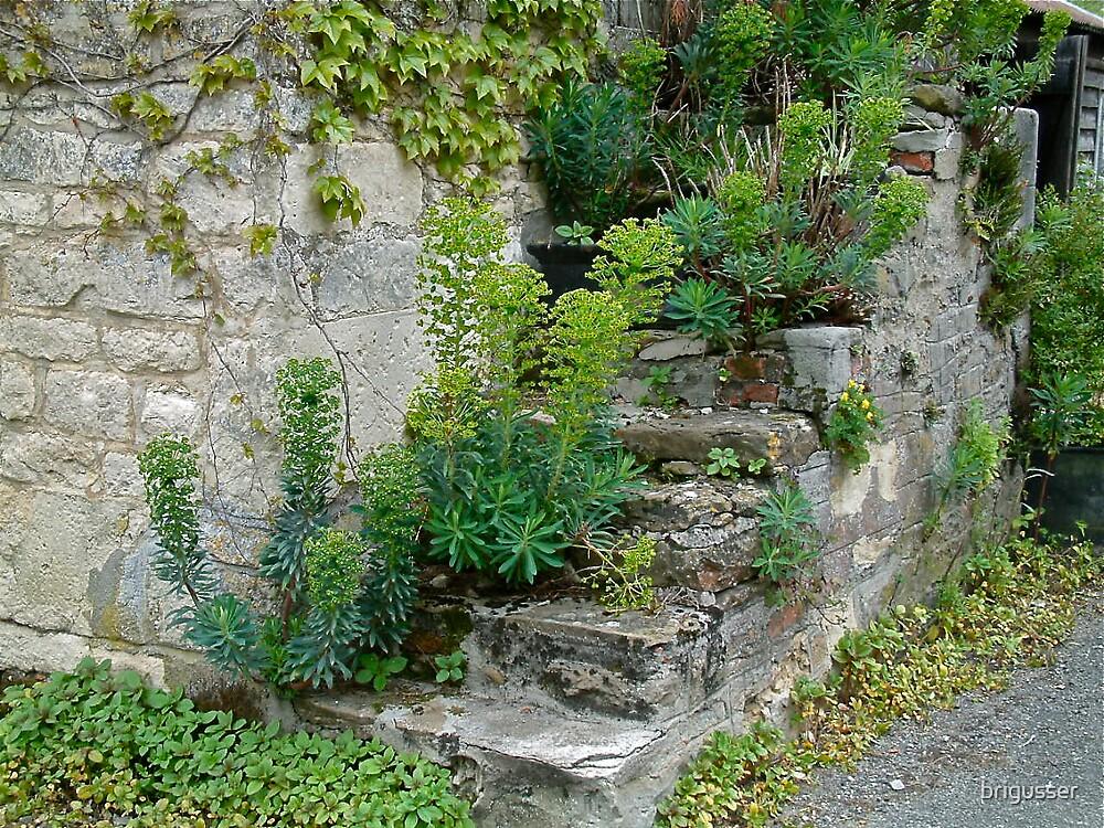 The Olde Steps by brigusser