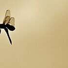 Dragonfly by Richard Sims