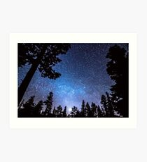 Forest Star Gazing An Astronomy Delight Art Print