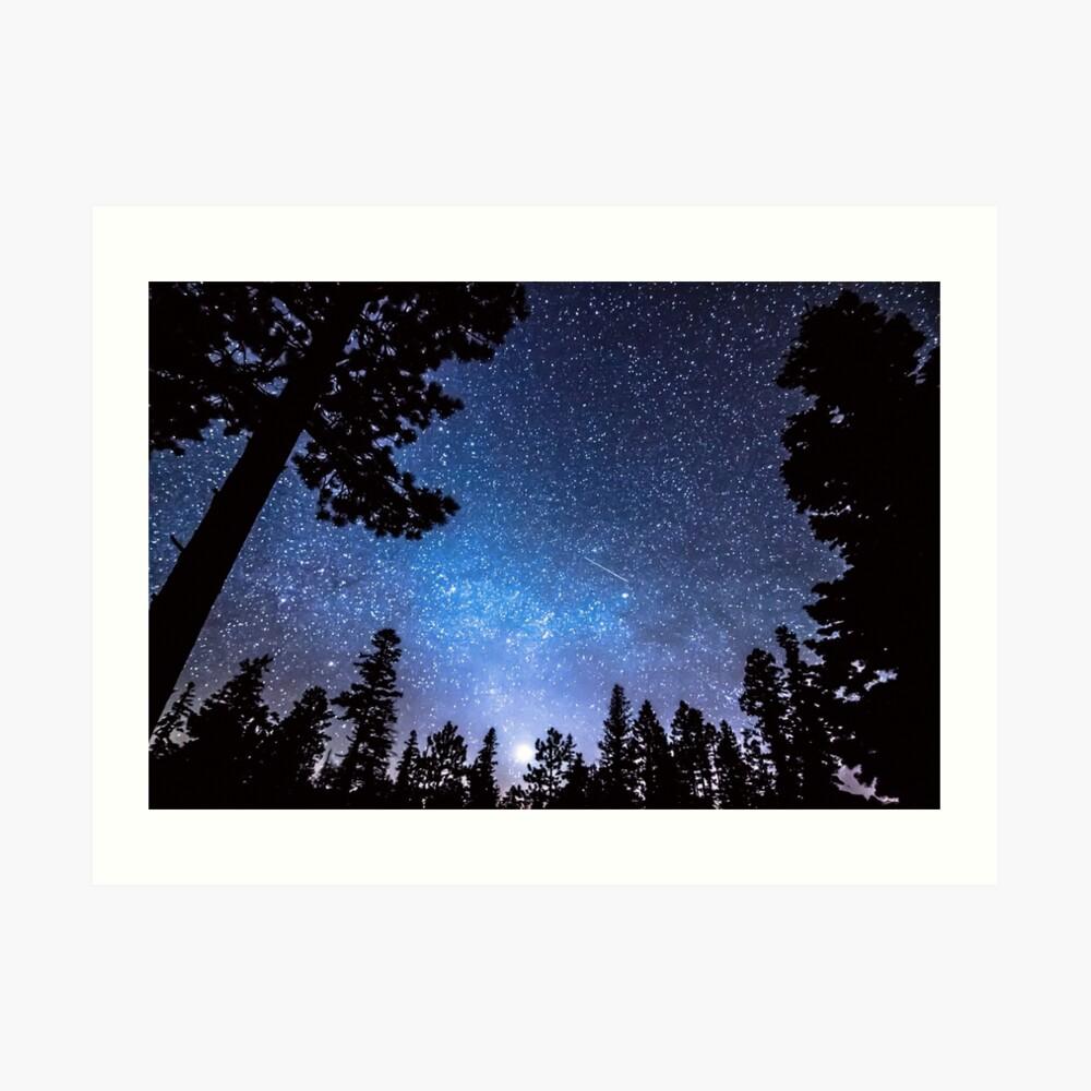 Forest Star Gazing An Astronomy Delight Art Print