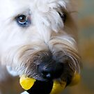 Pauley and his Bee by overcast