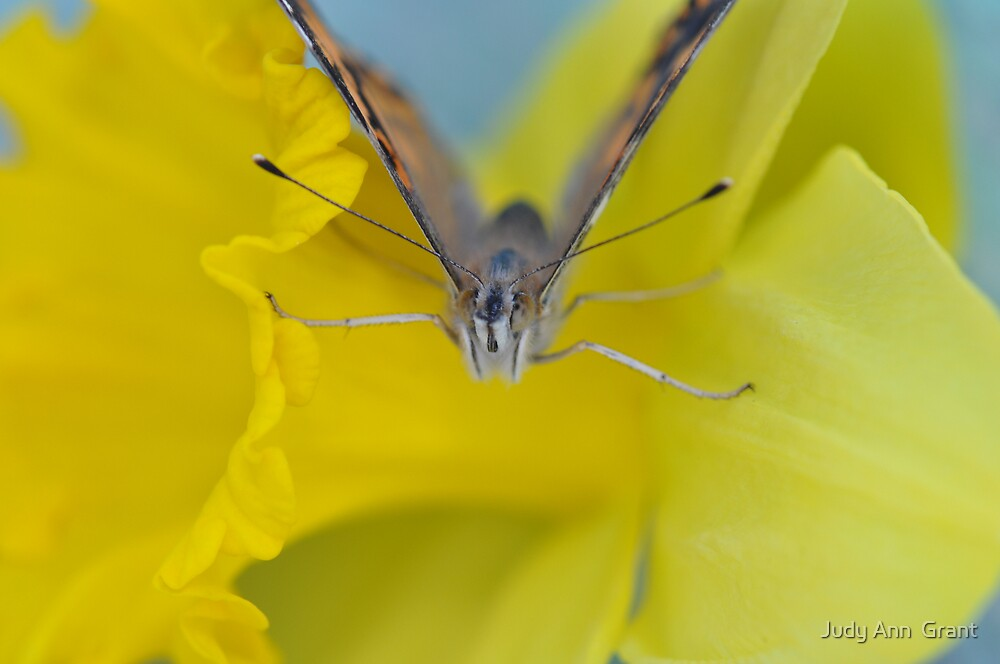 The Butterfly Stretch by Judy Ann  Grant