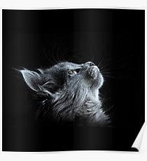 Grey Cat on Black Background Poster