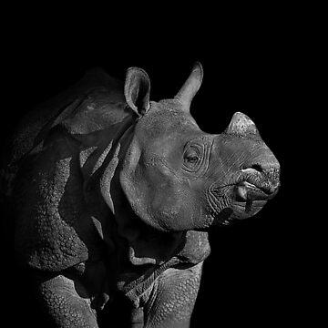Rhino by Sparky2000