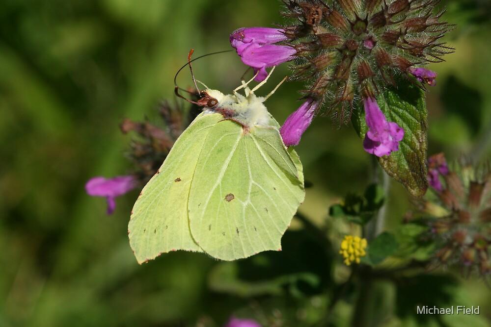 Brimstone Butterfly by Michael Field