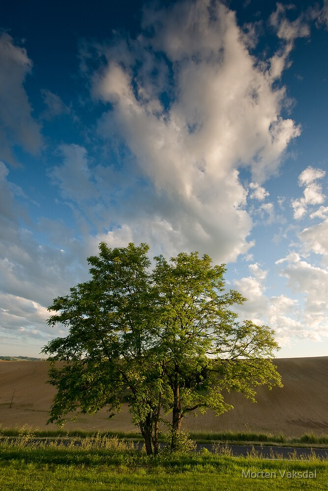Tree & clouds by Morten Vaksdal