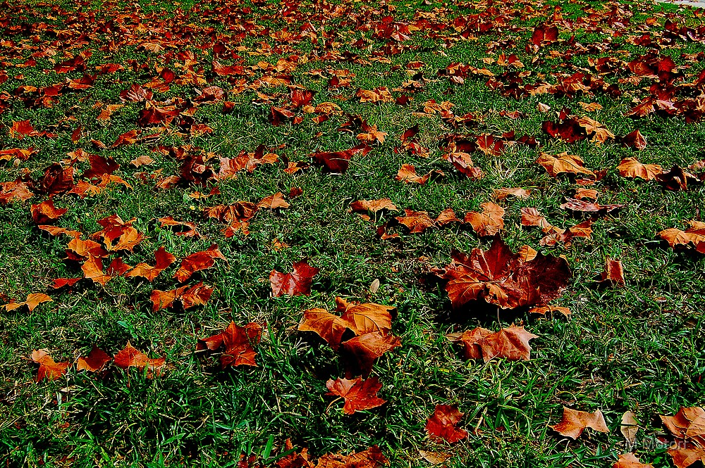 Cliche Leaves by M Motorr
