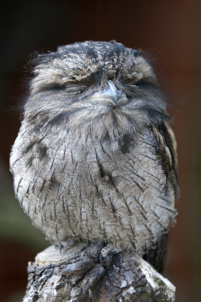 Tawny Frogmouth by Robert Kendall