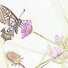 Swallowtail Butterfly in Pastel by hummingbirds