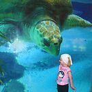 My  friend the turtle  by bogna777